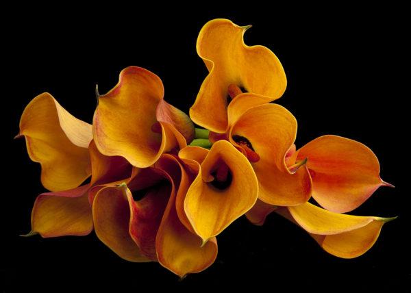 bloemen, aalsmeer